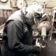 Metal Plating Professional